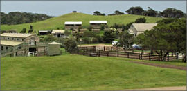 Ace Hi Riding Ranch - Accommodation BNB