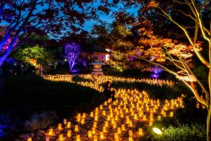 Canberra Nara Candle Festival - Accommodation BNB